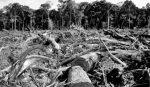 A pesar de la cuarentena se arrasaron más bosques que el año pasado