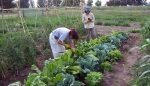 En Moreno prohibieron el uso de agrotóxicos en los alimentos